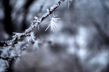 Девушка-Снежинка
