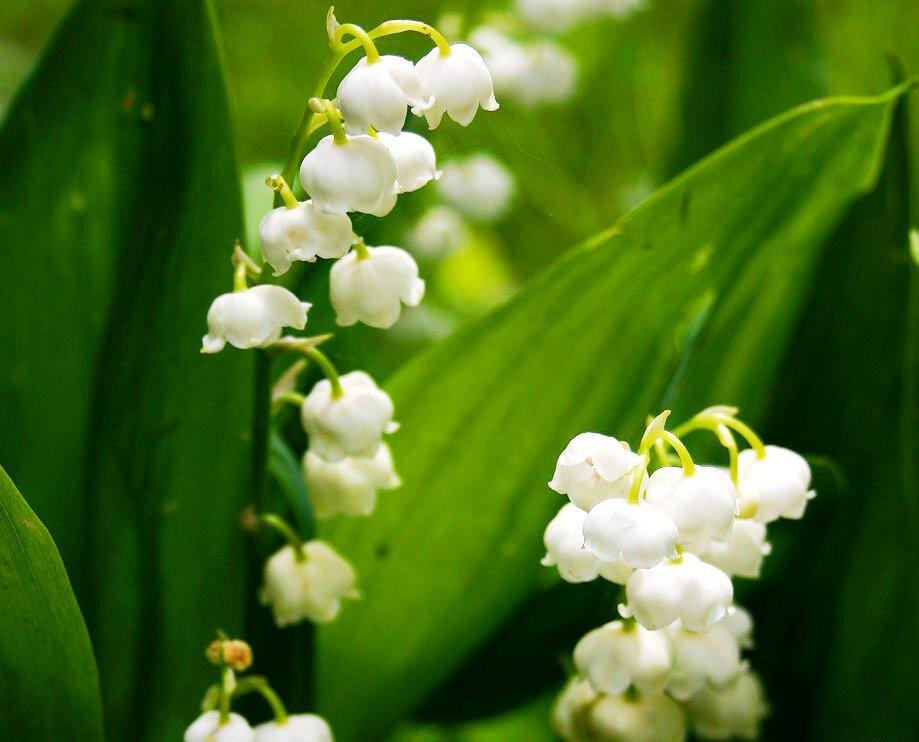 Каких цветов бывают сапфиры
