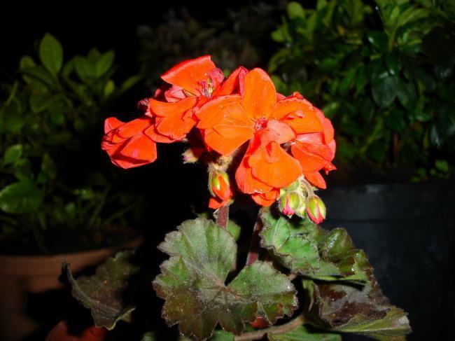 Красная площадь осенью фото