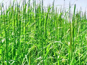 Как сделать высокую траву