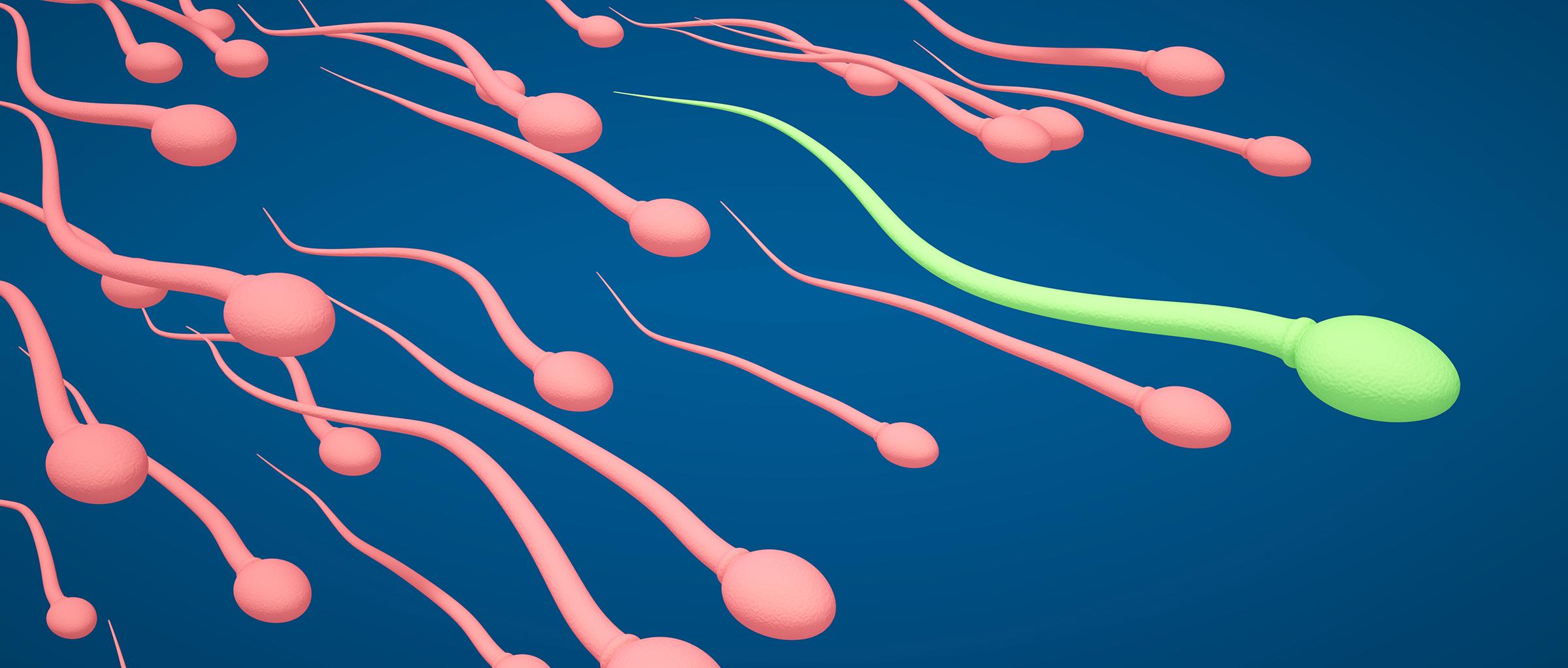 Как повысить подвижность сперматозоидов как увеличить активность 94