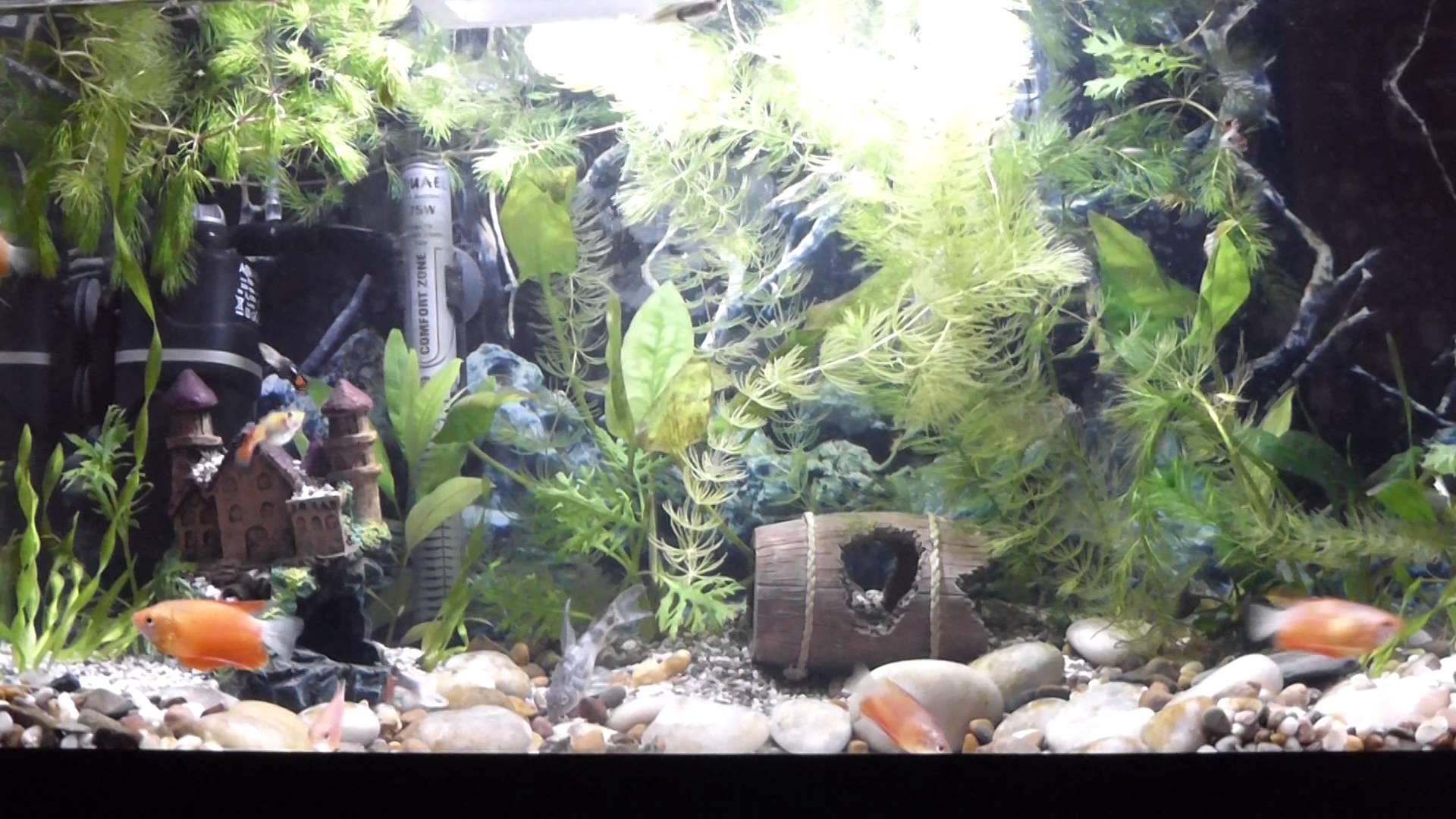 Толкование сна: аквариум с рыбками, по сонникам