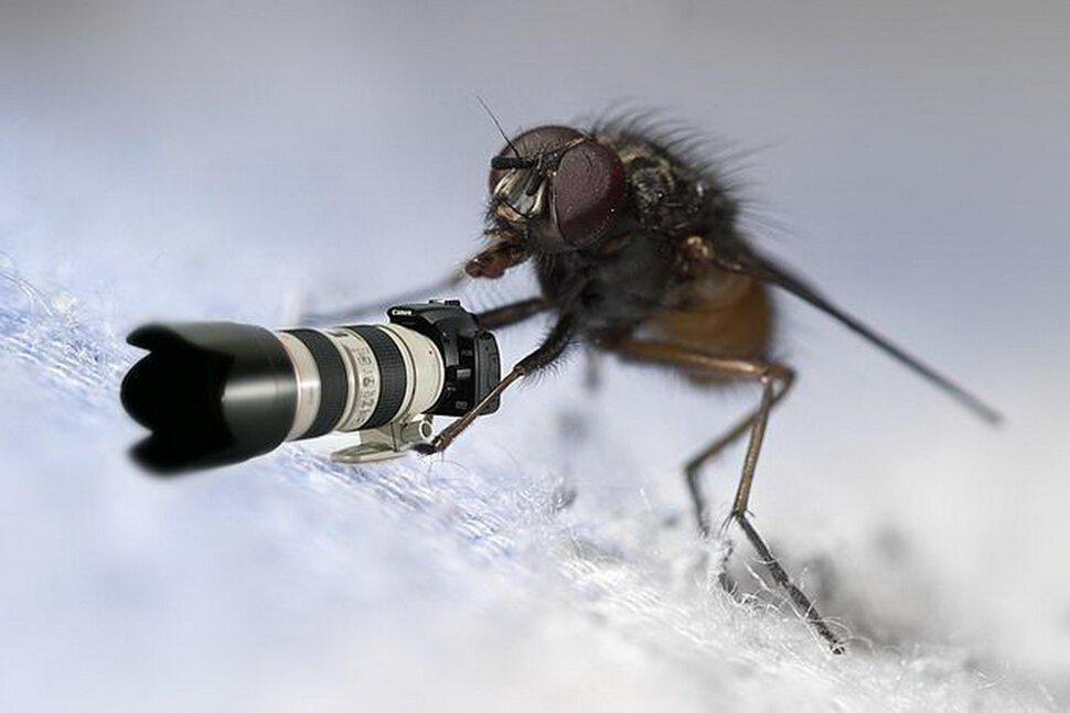 Маленькими, муха прикольная картинка