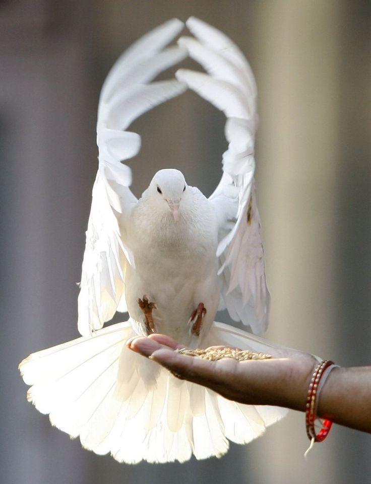 картинки с изображением голубь в руке настоящими джипами