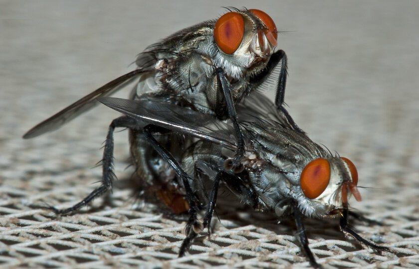 Смешных, классные картинки мух