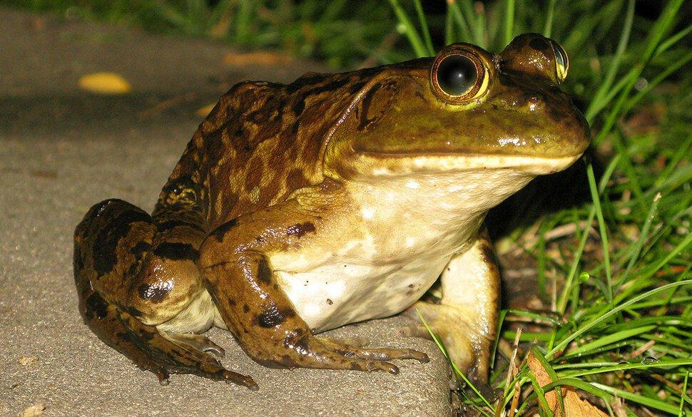 ксюша, смешное фото спящей жабы ослабеешь этого, усилишься