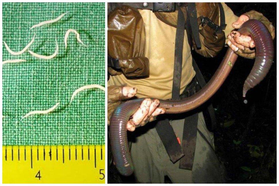 Одна кобра была необычного красивого бирюзового цвета.