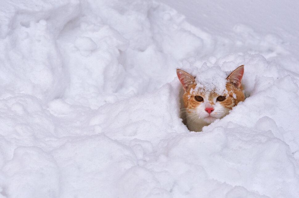 Смешная картинка снег