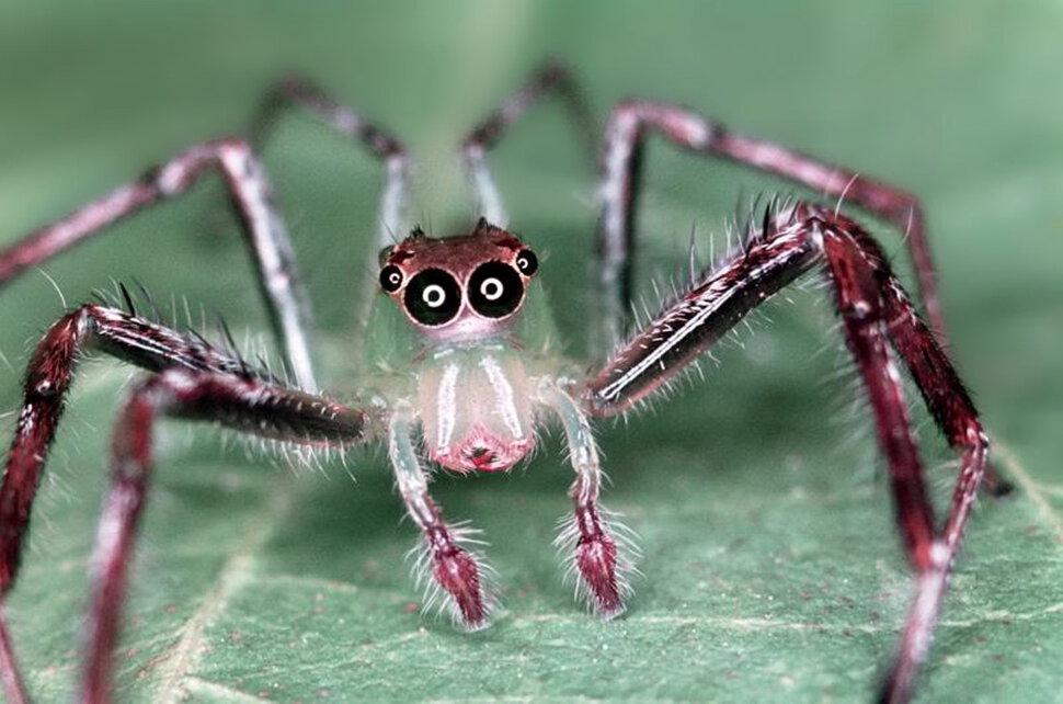 Картинка смешной паучок, животные картинки для