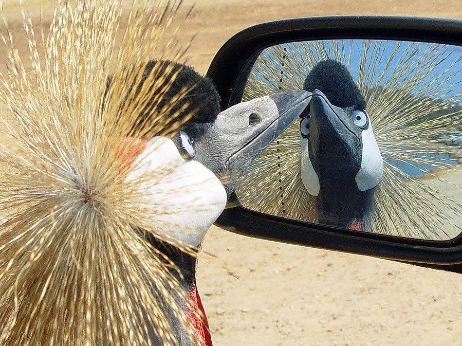 Смешные картинки про зеркало, зарубин стоимость красивые