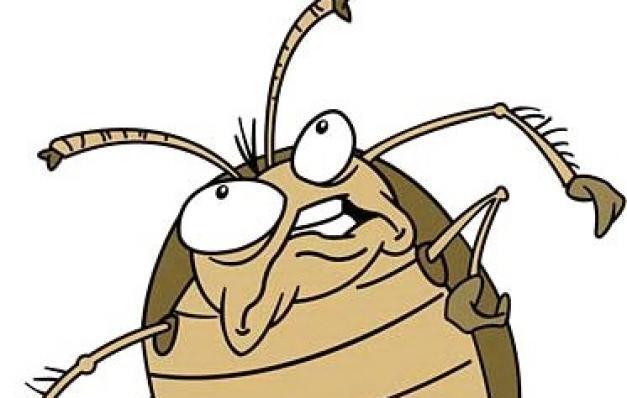 Рисунки, картинки таракан смешной