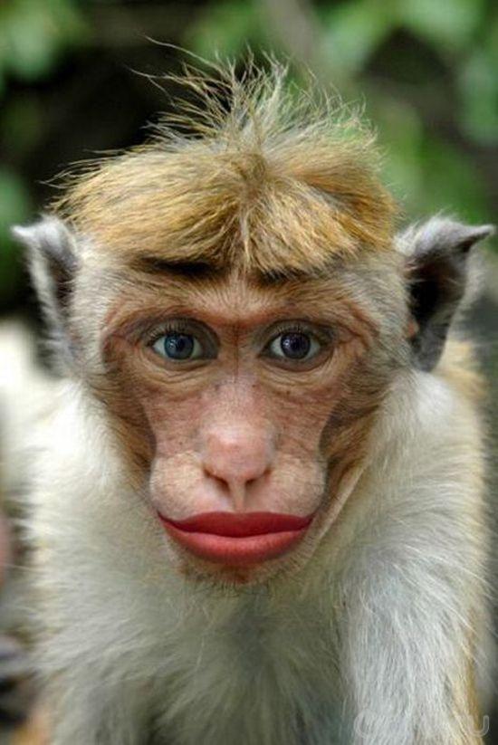 Прикольные картинки обезьян на аватарку