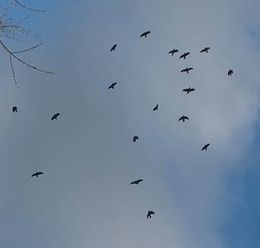 Сейчас вы можете узнать, что означает видеть во сне много птиц небе, прочитав ниже бесплатно толкования снов из лучших онлайн сонников дома солнца!