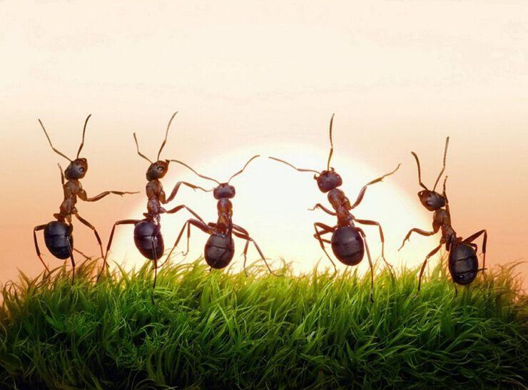 День, смешные муравьи картинки