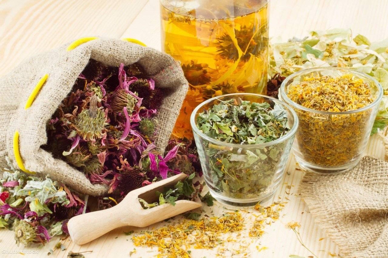 Картинки применение лекарственных растений