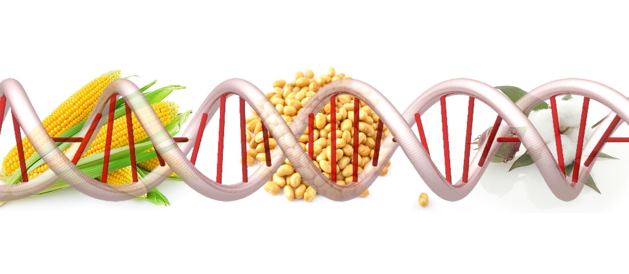 Генетически модифицированные продукты.Общие сведения.