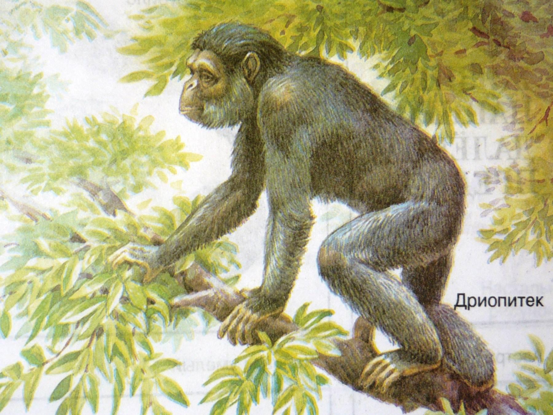 Древние предки человека картинки мистической саги
