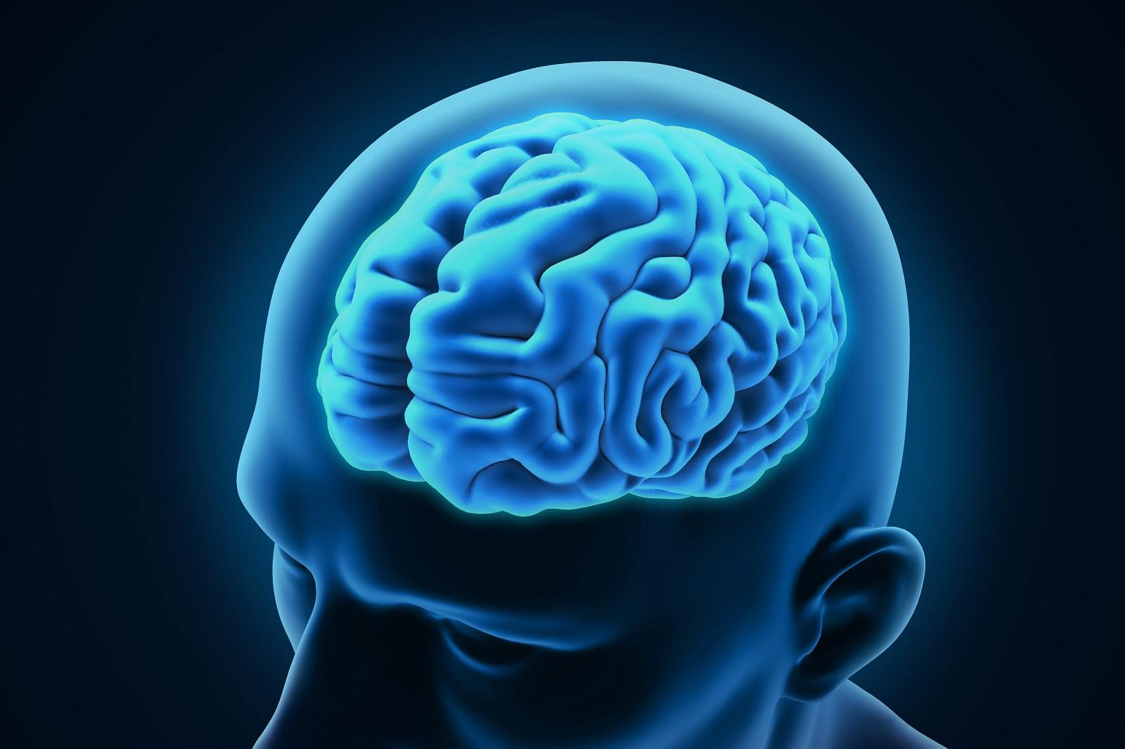 Мозг человека фото картинки