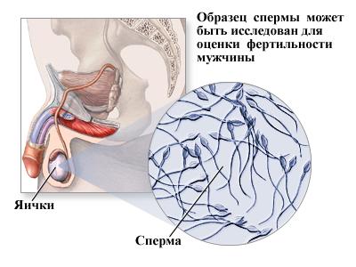 Как получить от мужчины больше спермы