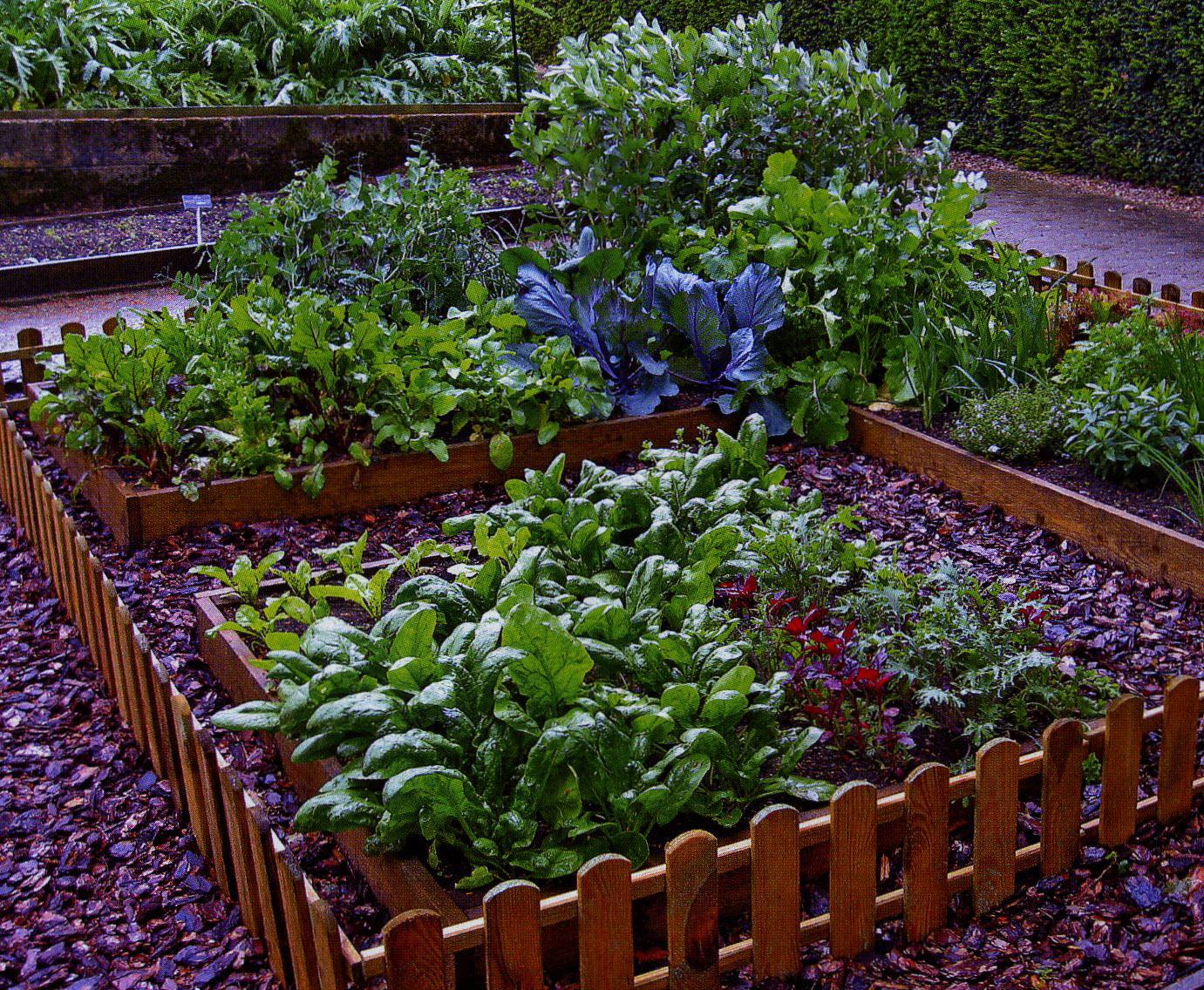 Дизайн сада и огорода посмотреть фото совершенно справедливо