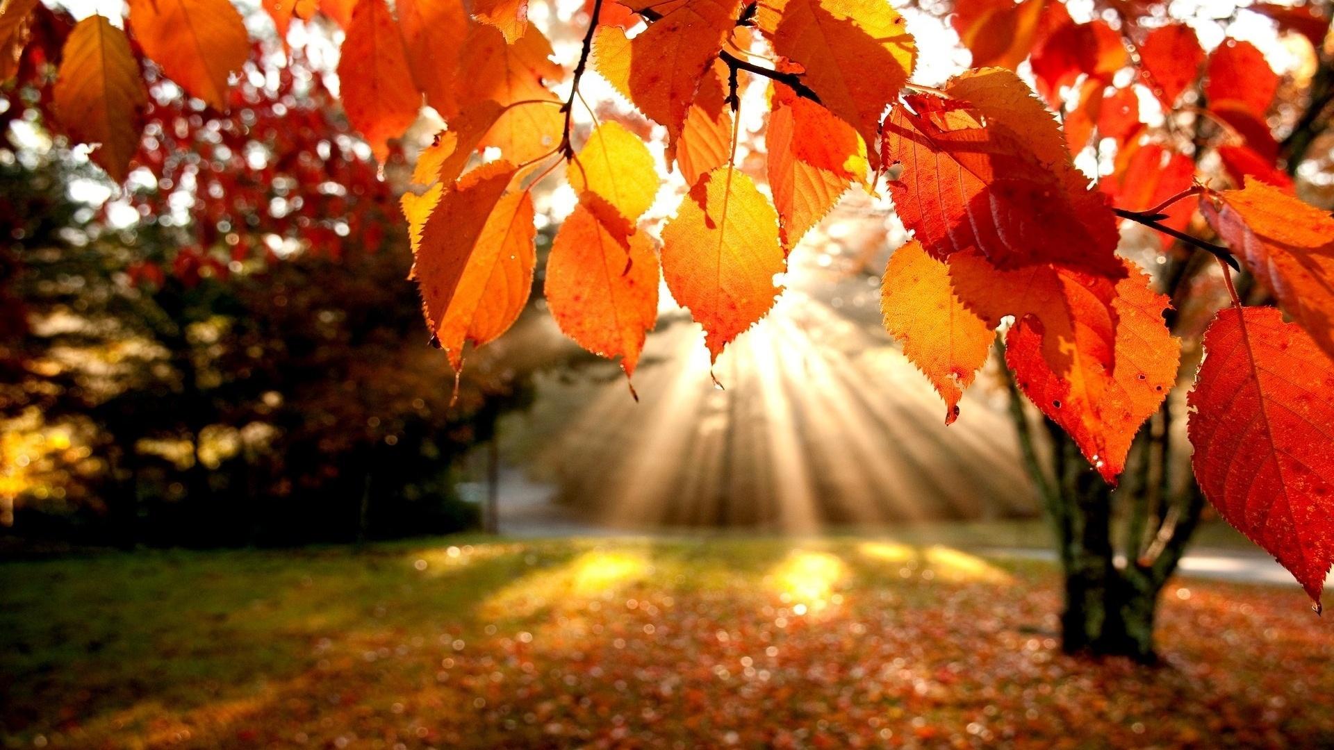 Картинка на золотую осень