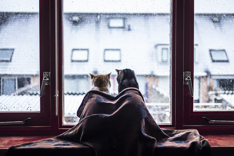 употребительной среди человек и кошка плачут у окошка картинки кроме известных