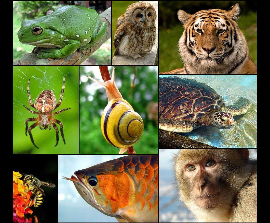 картинки биологическое разнообразие