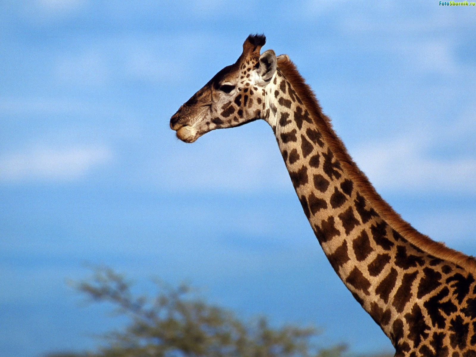 Забавные факты о животных с картинками старается