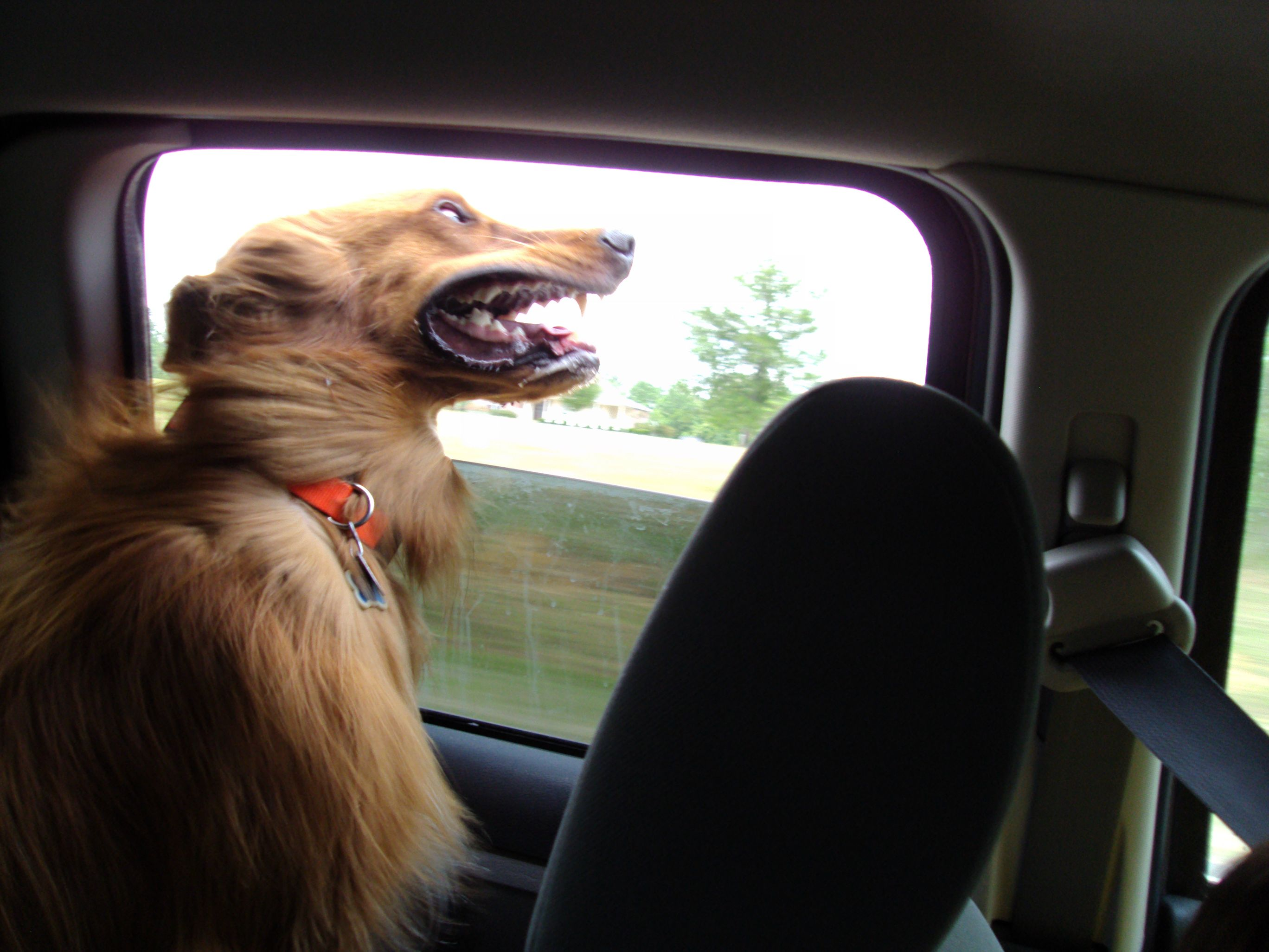 Смешные картинки, смешные картинки еду на машине