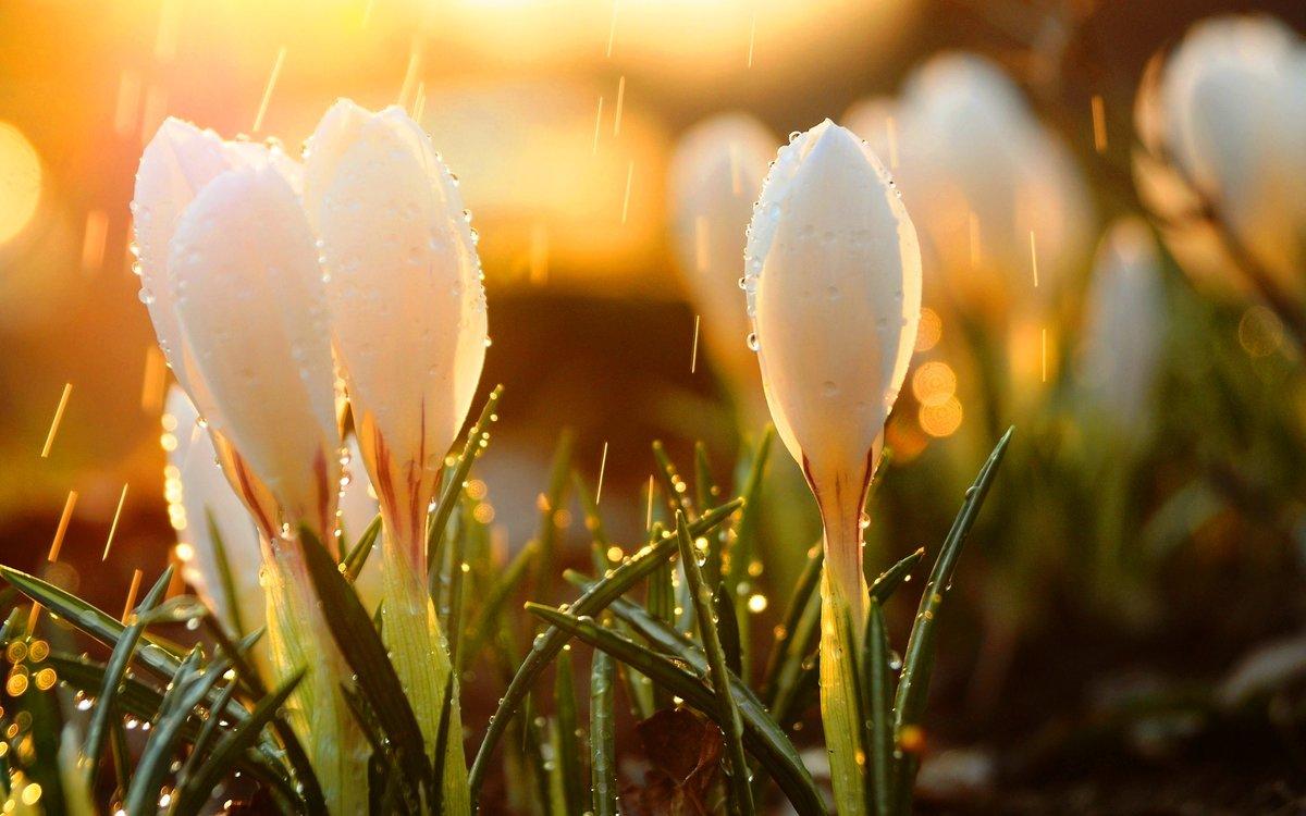 обожают прозрачные картинки весна апрель на рабочий стол работала отделе