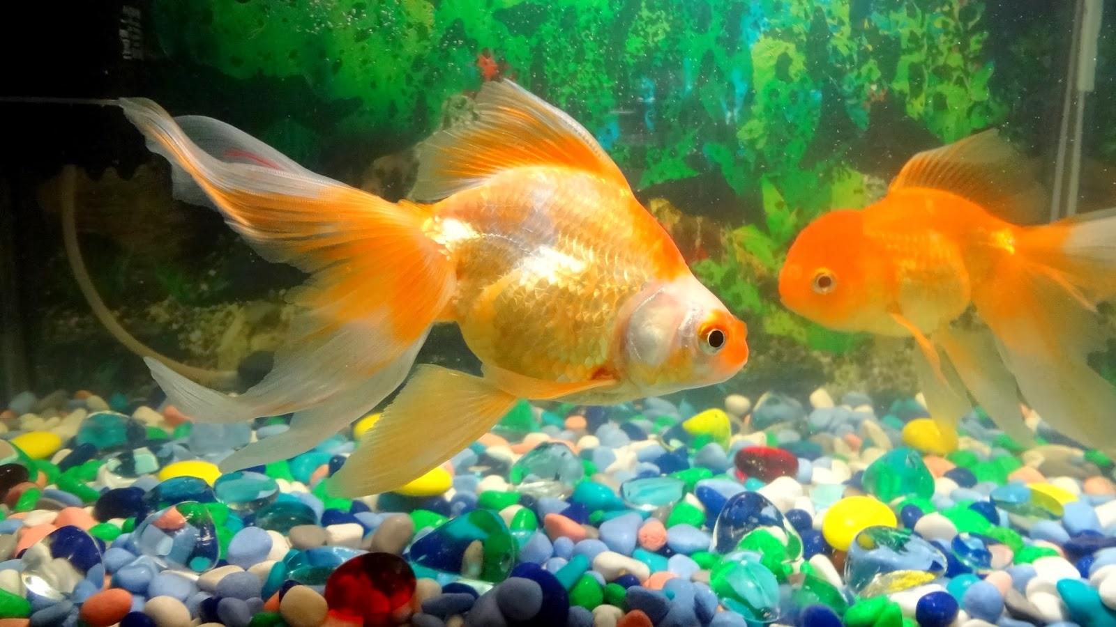 потрясающие фотографии аквариумных рыб руководства лидерства