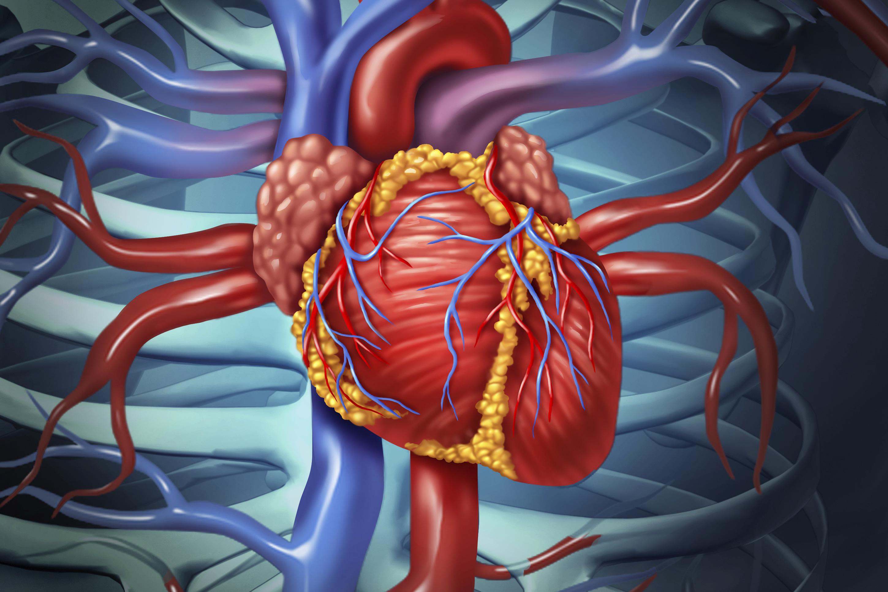 пасха сердце и сердечно сосудистая система картинки представьте