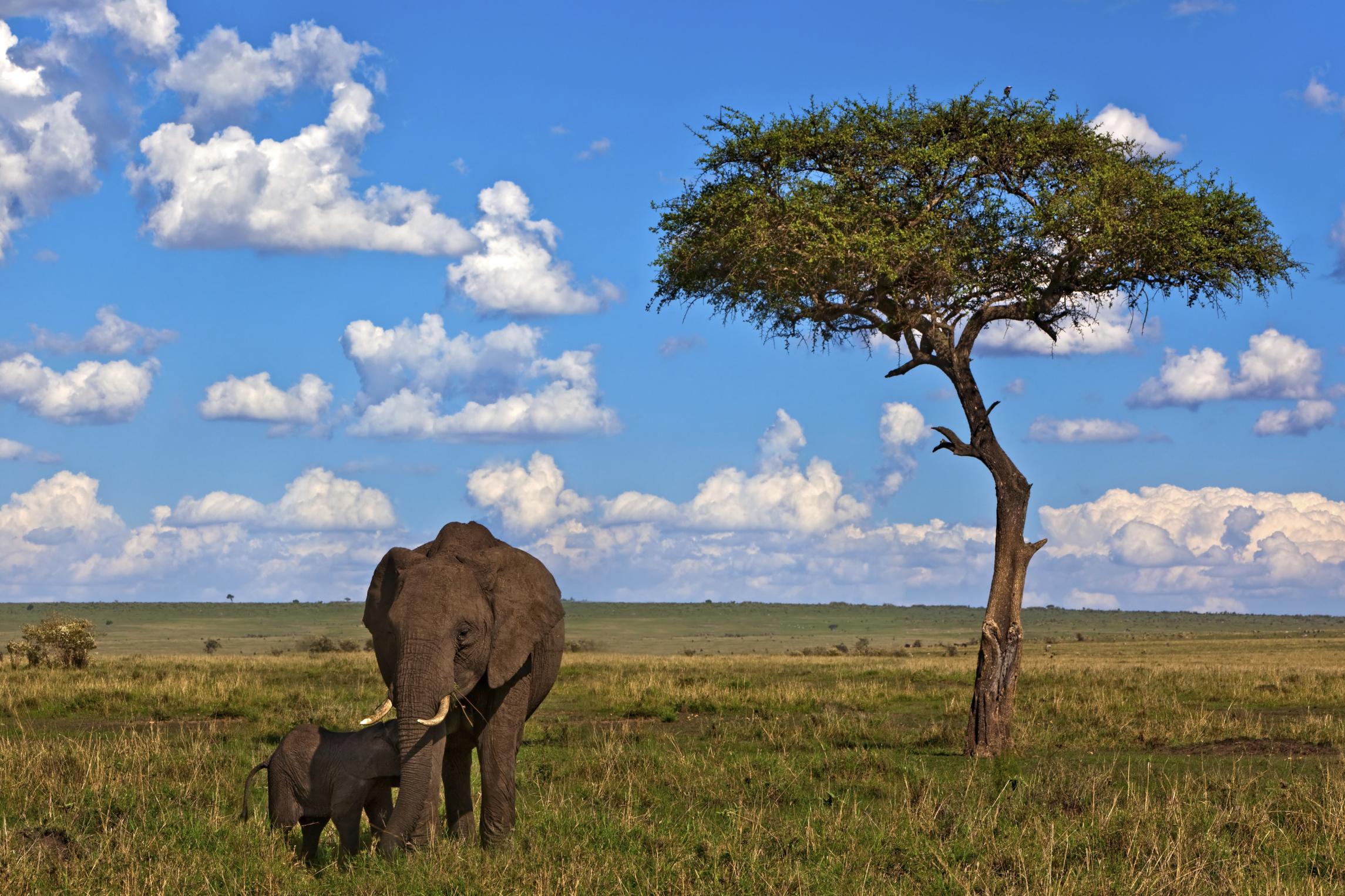 картинка природа африки без животных