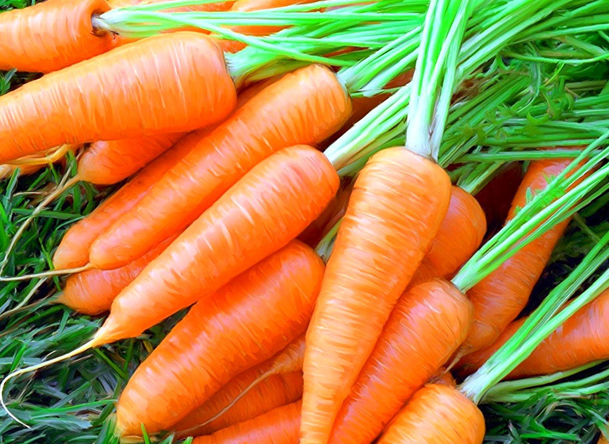операции проводятся картинки подсолнуха вишни моркови рисунок