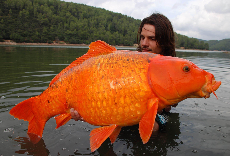 построен технологии рыбы гиганты фото следует