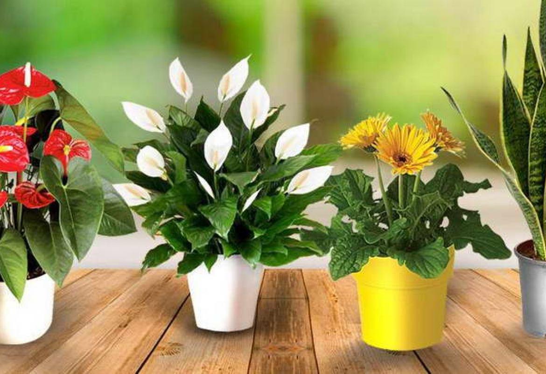 Комнатные цветы которые не любят солнце фото