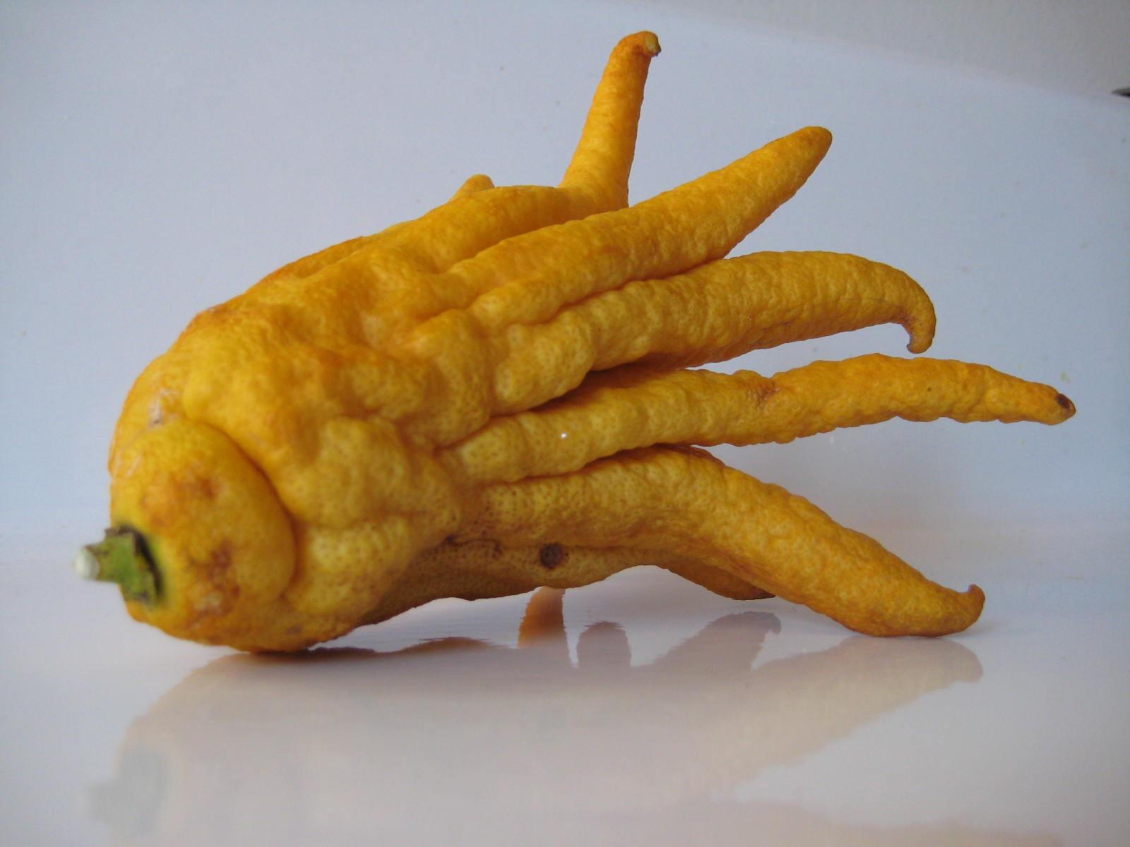 необычные фрукты и овощи фото помимо