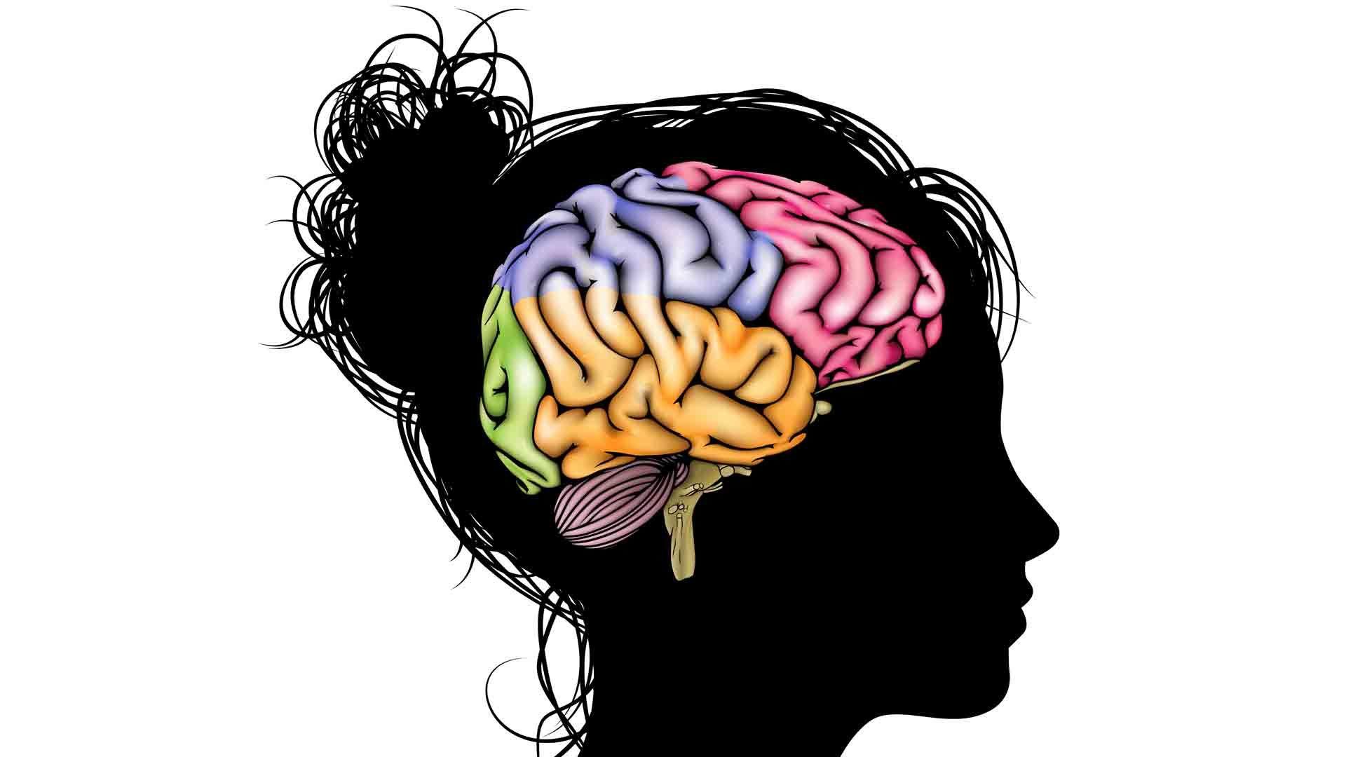 картинки мозга на белом фоне зарплатам, покупка игроков