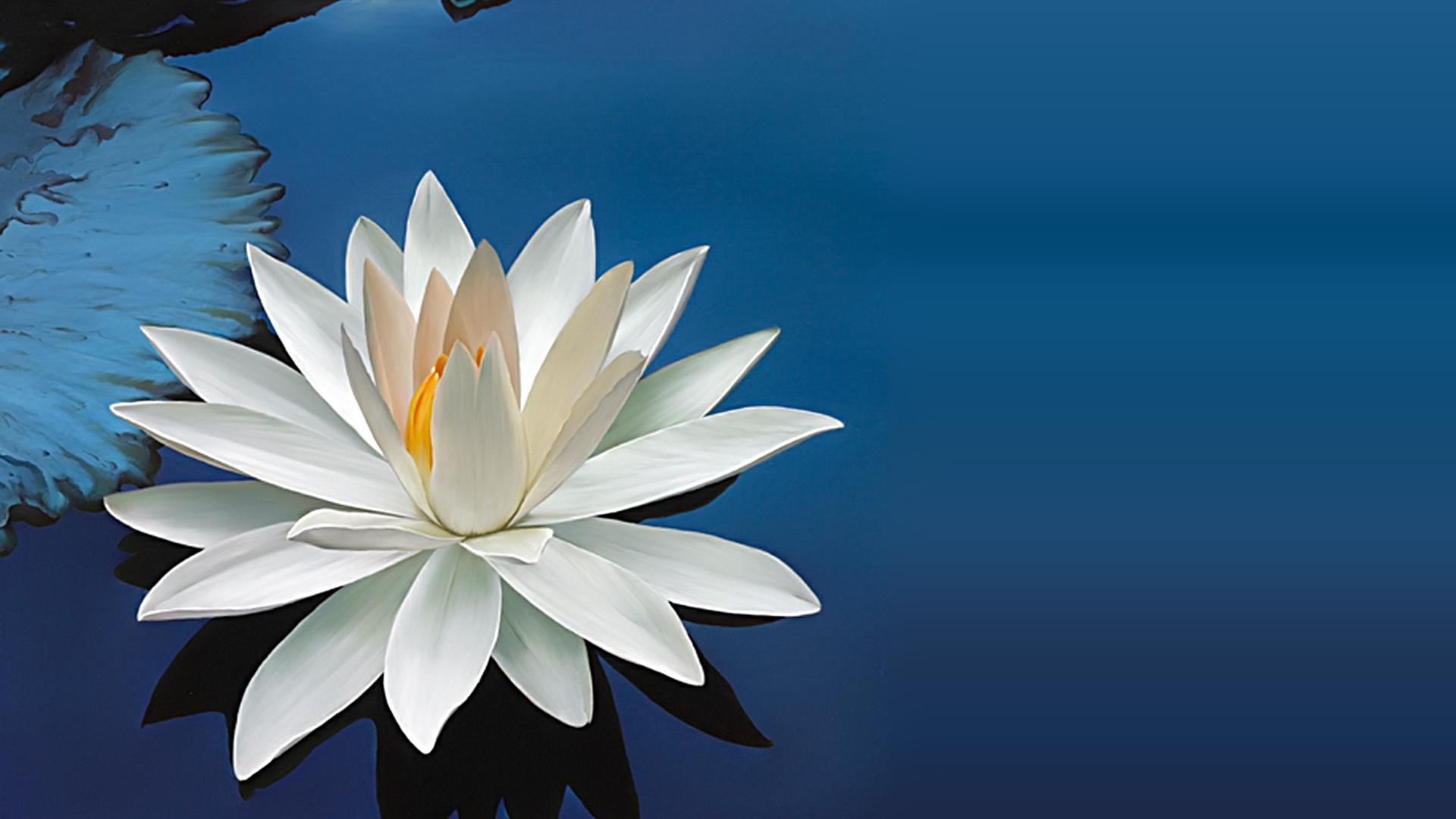 открытки с днем рождения цветы лотос прошли третий
