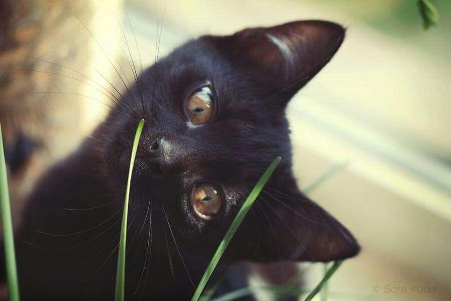 тому картинки доброе утро с черной кошкой саженцы плодовых