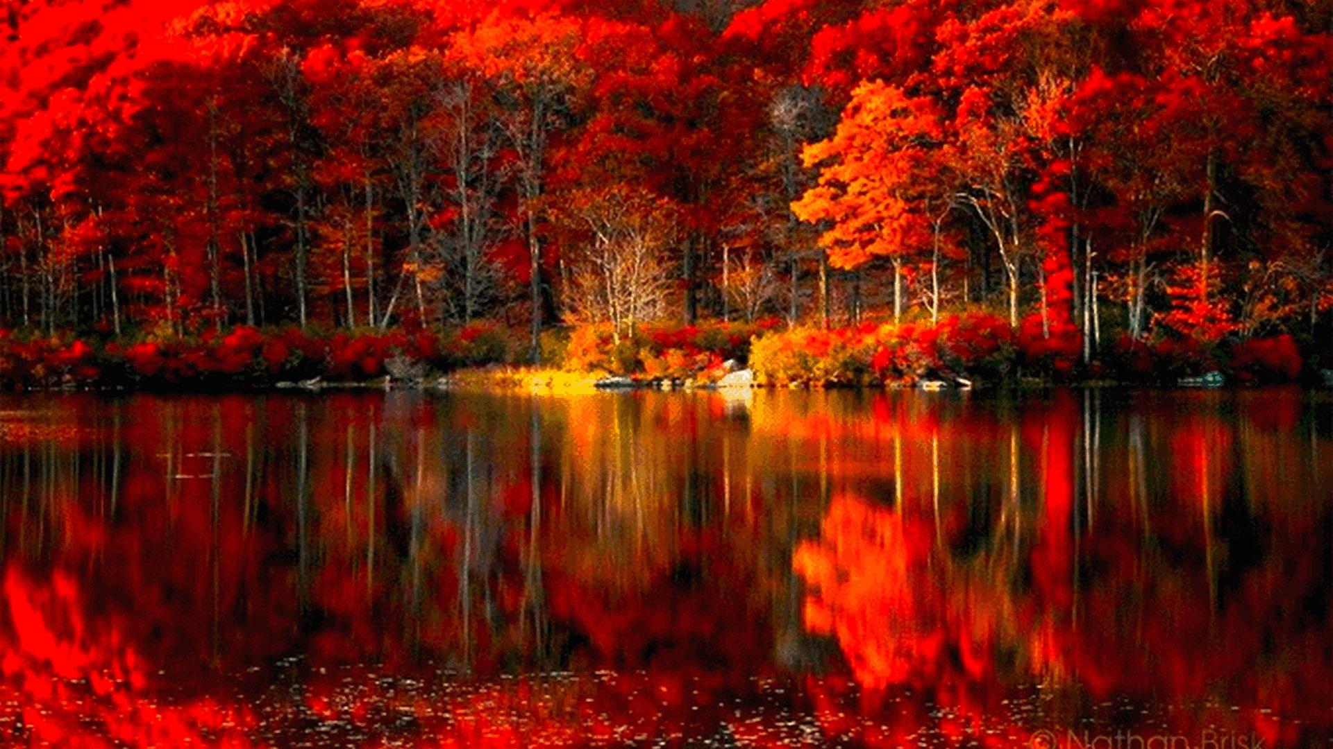 Яркая осень картинка