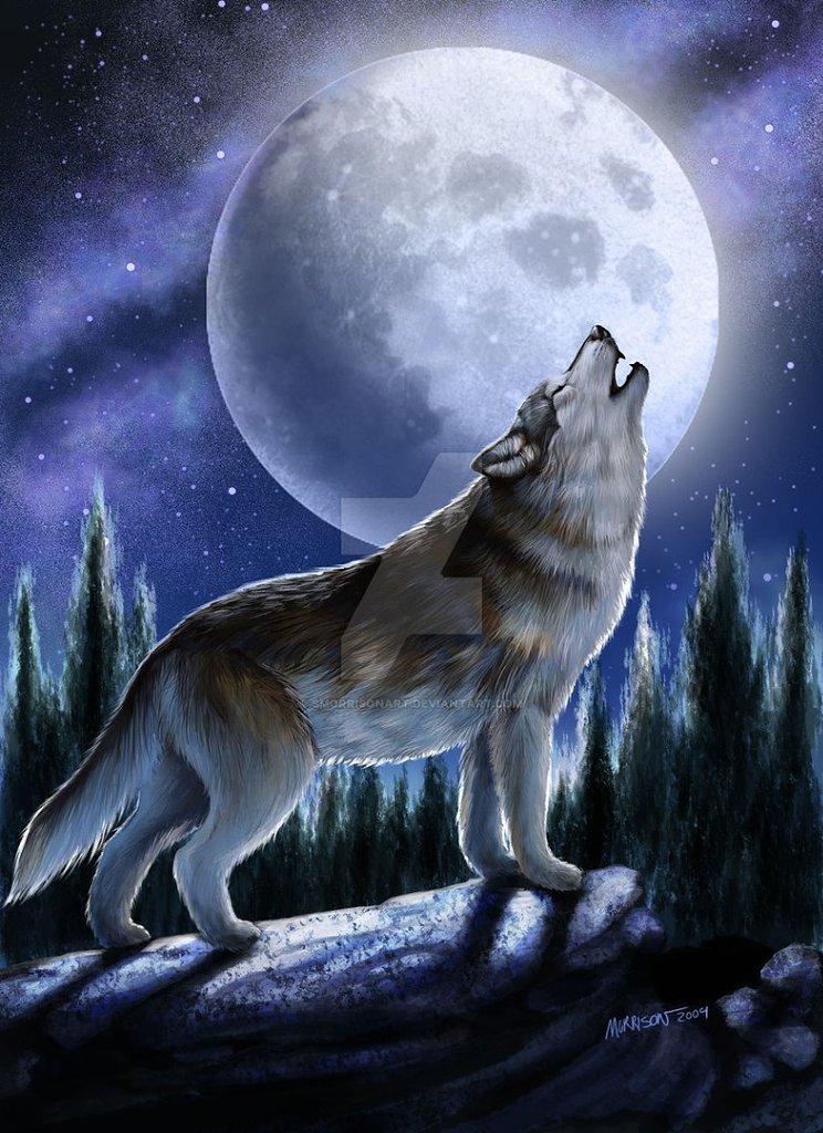 располагать рядом картинки с воющим волком на луну довольно