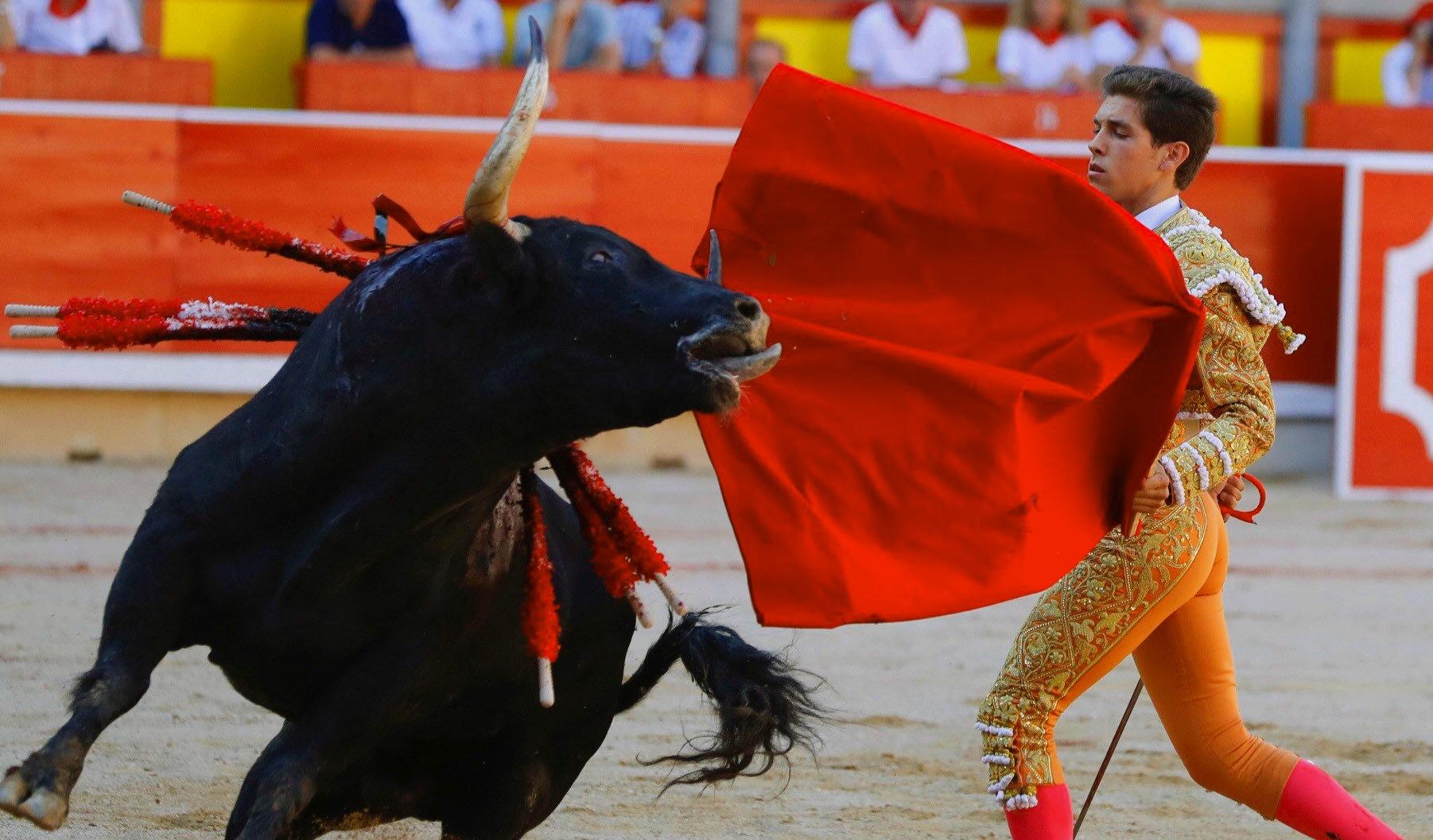 Картинки игры с быком