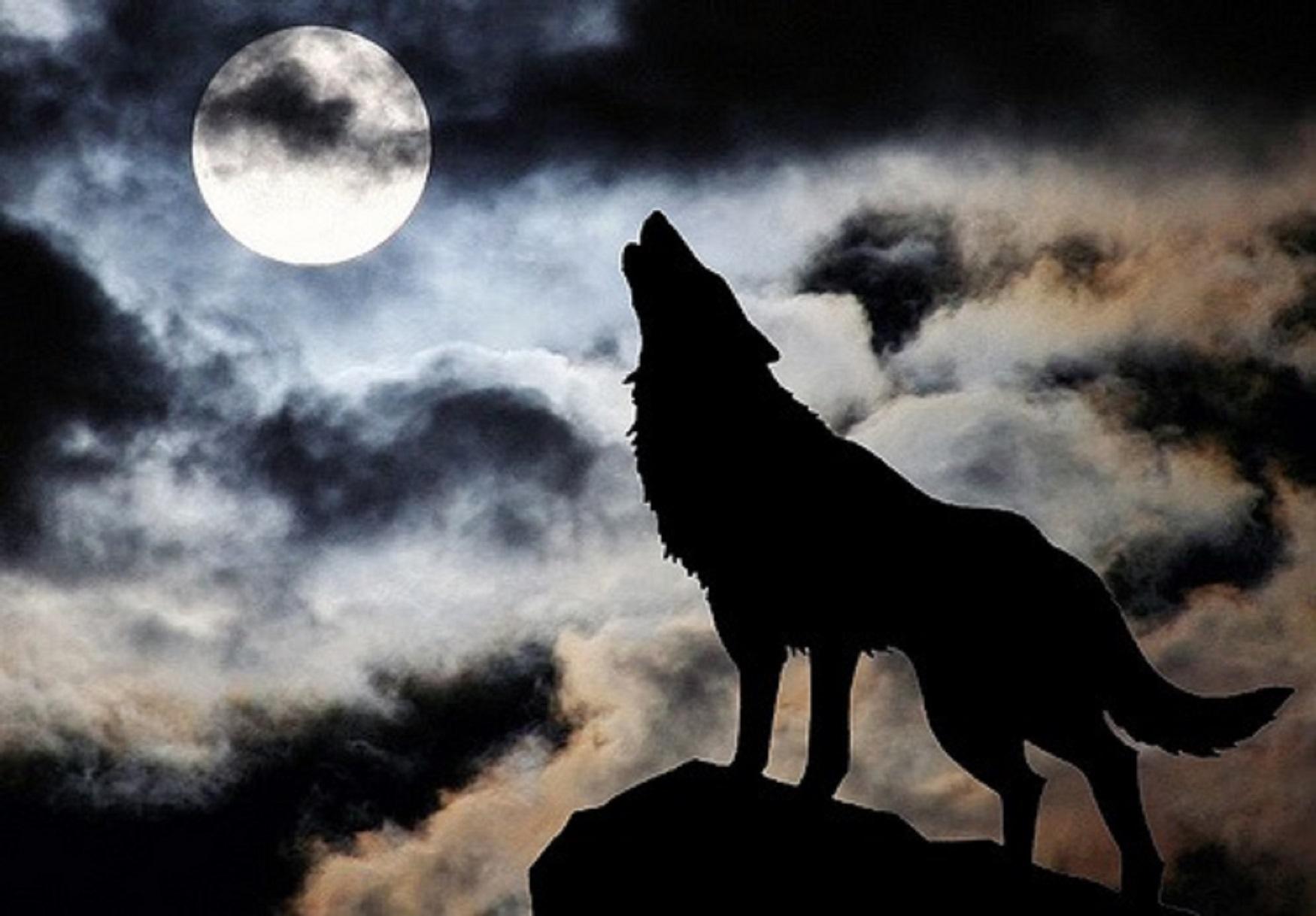 Фото волков одиночек луна