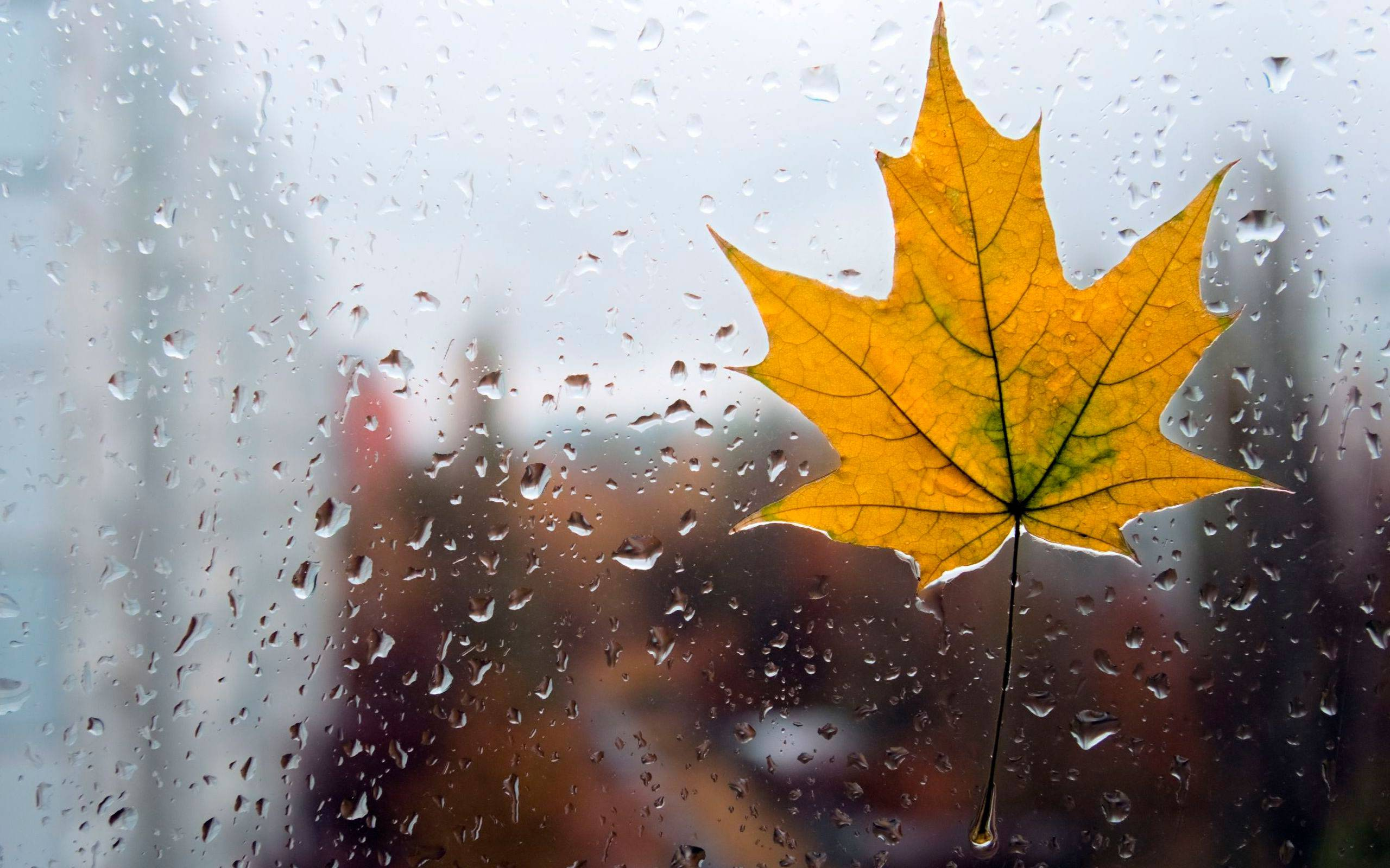 Осеннее дождливое утро картинки