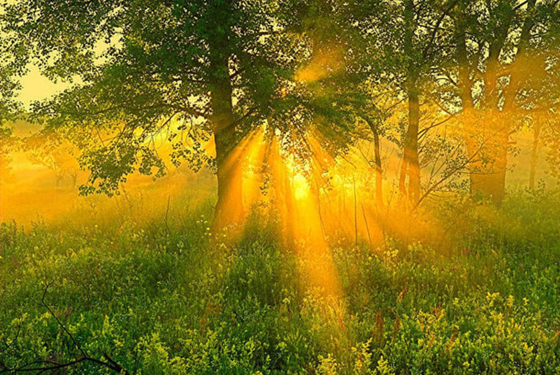 Утро, открытки лучи солнца