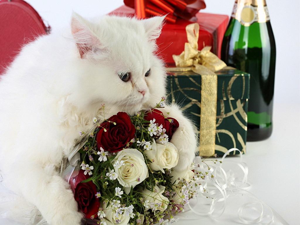 Картинка с днем рождения кот с цветами, картинки добрый