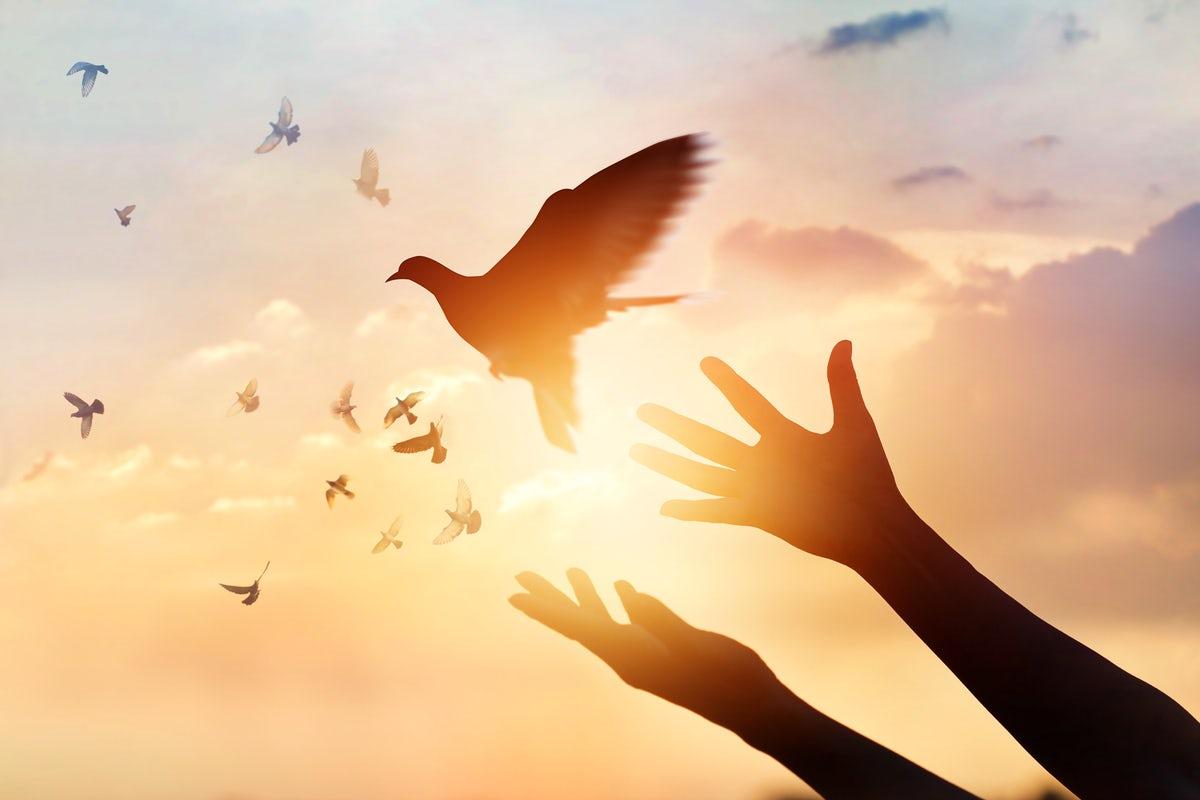 Птица в руке картинки