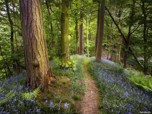 Мой июньский,летний лес!