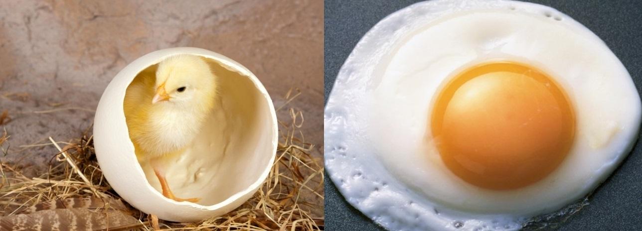 Дар божий с путай яичницой не